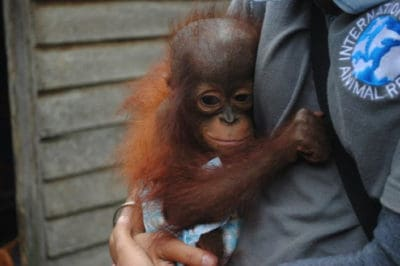Rescuers Want To Buy Back Forest For These Baby Orangutans Who Lost Everything