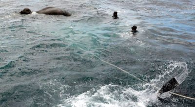 Sri Lankan Navy Rescues Elephant Stranded In Indian Ocean [Video]