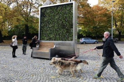 "This Single ""Tree"" Can Absorb As Much Air Pollution As An Entire Forest"