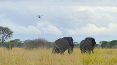 Drones Are Now Protecting Elephants In Africa Thanks This To American Businessman