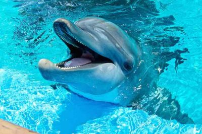 Mexico City Just Passed A Landmark Dolphin Captivity Ban