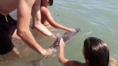 Baby Dolphin Dies After Selfie-Obsessed Humans Surround It, Take Photos