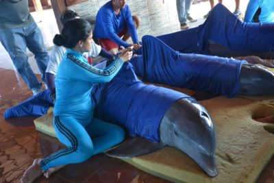 Cuba Airlifts 6 Dolphins To Safety As Hurricane Irma Slams The Island