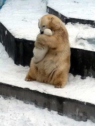 http://www.onegreenplanet.org/news/polar-bear-hugging-her-baby-in-zoo-enclosure/