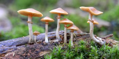 Study: 'Magic Mushrooms' Relieve Anxiety And Depression In Cancer Patients