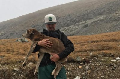 After 6 Weeks Trapped On Icy Mountain, Dog Rescued And Returned To Owners