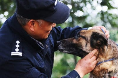 Chinese Cop Makes A Special Nursing Home For Retired Police Dogs