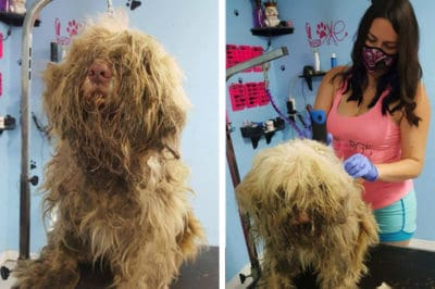 Dog Groomer Opens Shop At Midnight For Very Appreciative Abandoned Dog