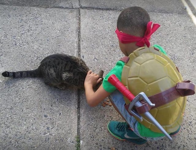 https://www.thedodo.com/close-to-home/boy-helps-street-cats