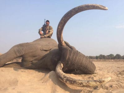 """Iconic Tusker"" Shot Dead By Trophy Hunters In Zimbabwe"