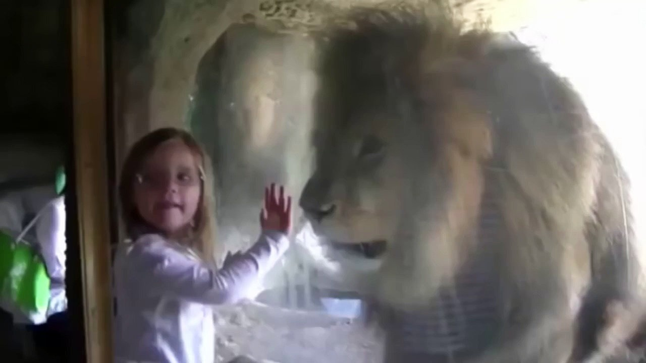 Image result for Zoo Lion's Response To Little Girl's Kiss Is Proof Animals Don't Belong In Captivity [Video]