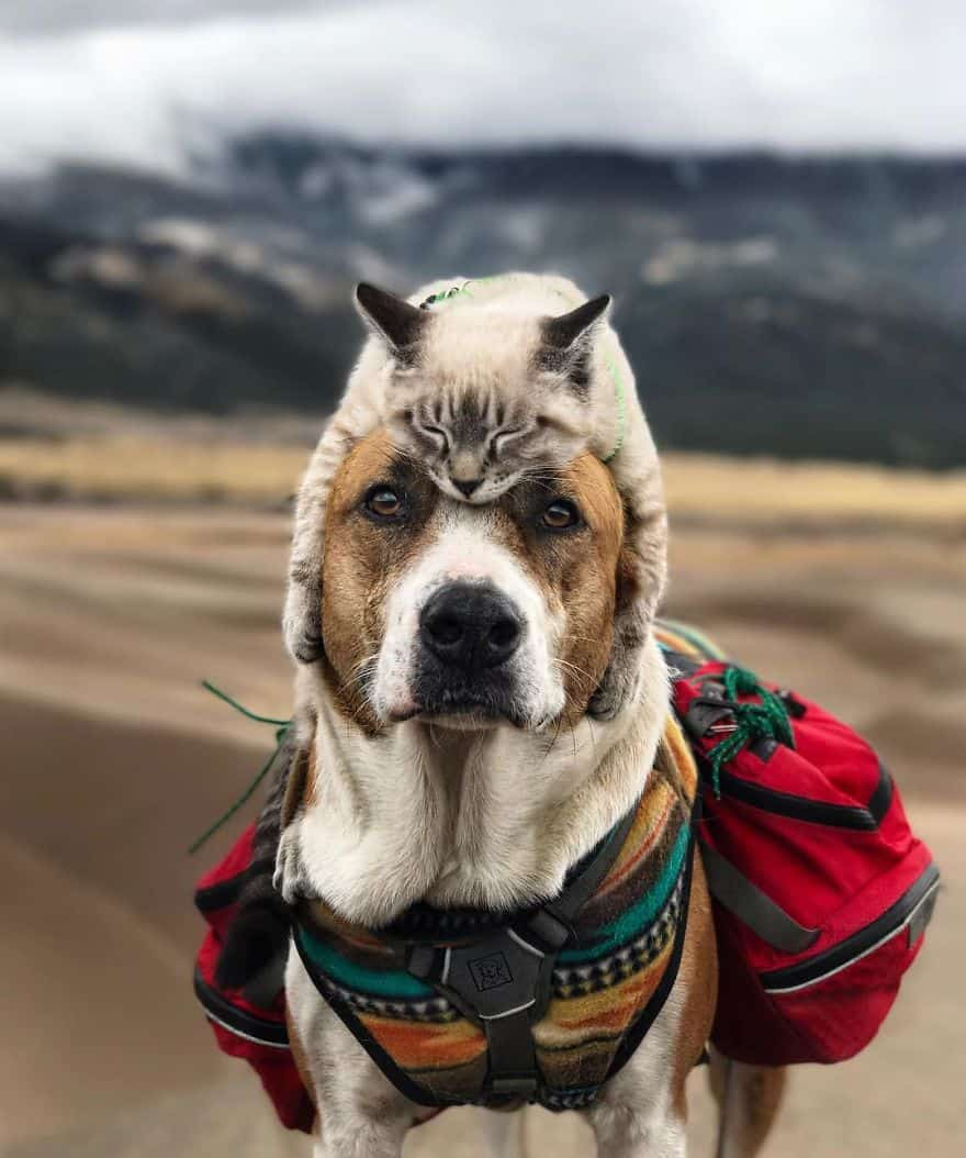 This Cat And Dog Are Best Friends And Their Hiking Pics Will Make - Cat and dog duo take the best travel photos ever