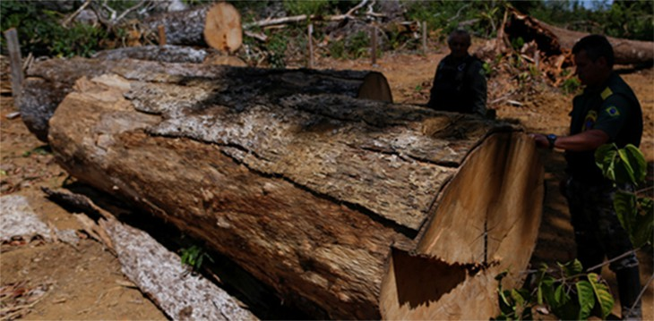 This Tree Trunk Keeps a Well-Guarded Secret, Deep Inside Its Mysterious Hole
